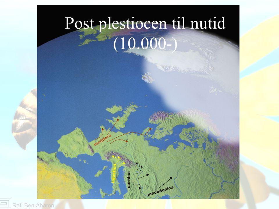 Post plestiocen til nutid (10.000-)