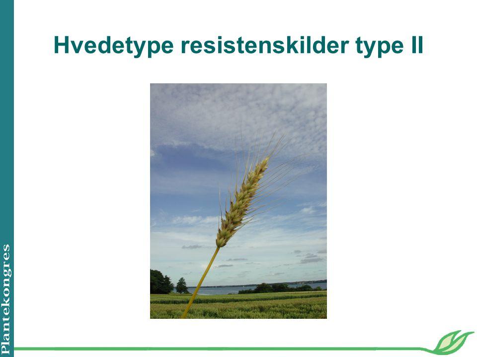 Hvedetype resistenskilder type II