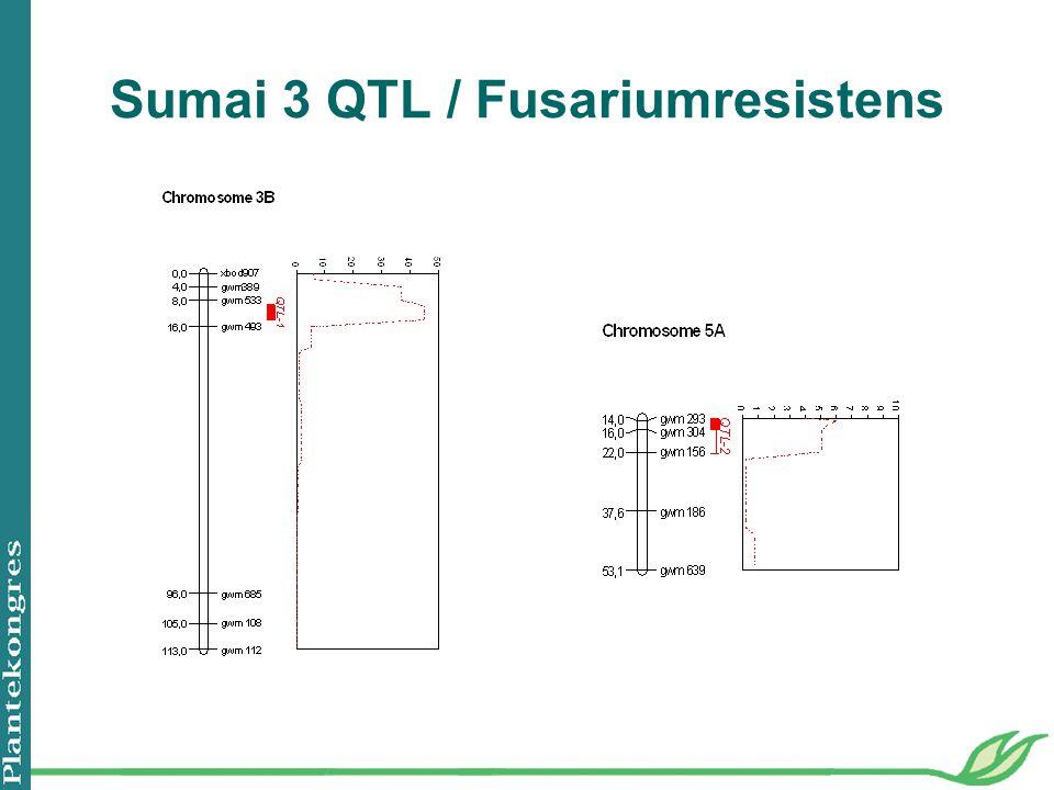 Sumai 3 QTL / Fusariumresistens