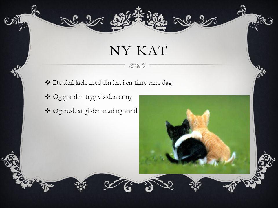 NY KAT  Du skal kæle med din kat i en time være dag  Og gør den tryg vis den er ny  Og husk at gi den mad og vand
