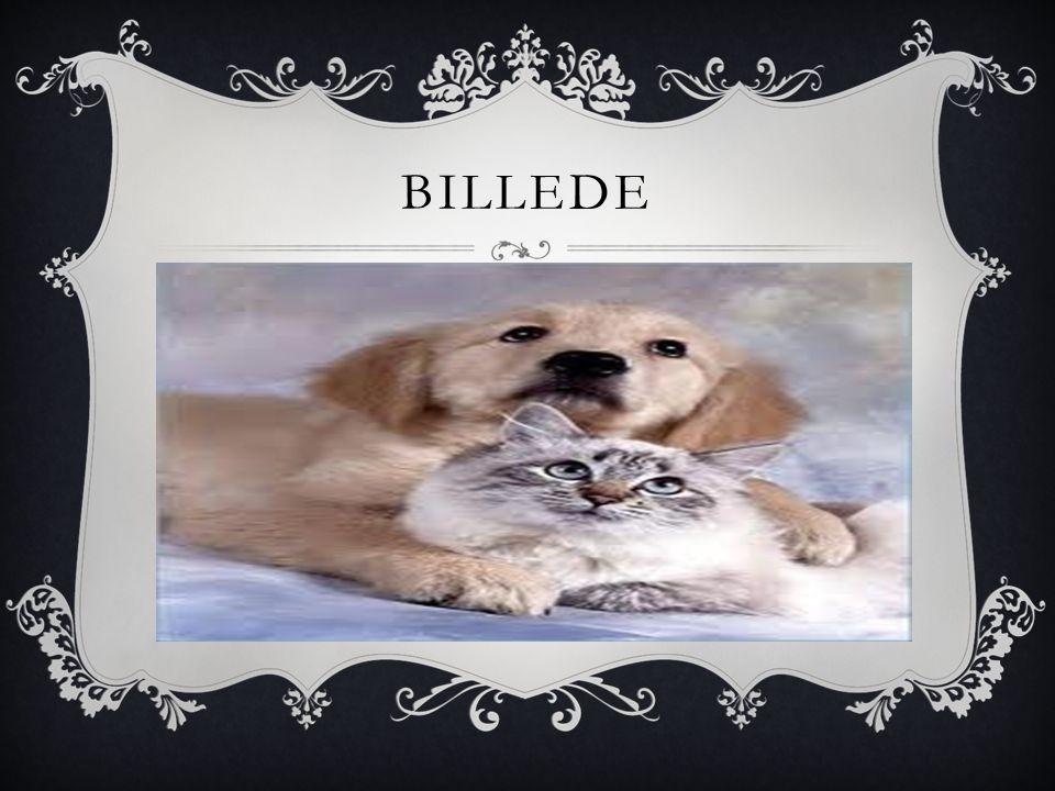 BILLEDE