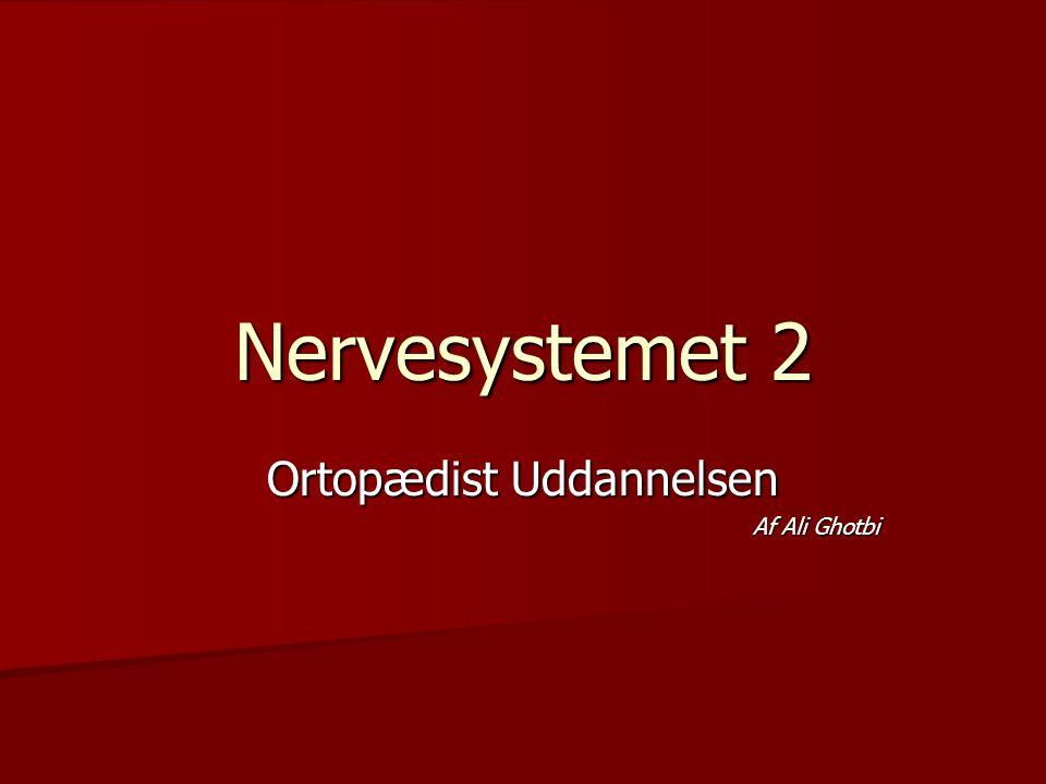 Nervesystemet 2 Ortopædist Uddannelsen Af Ali Ghotbi