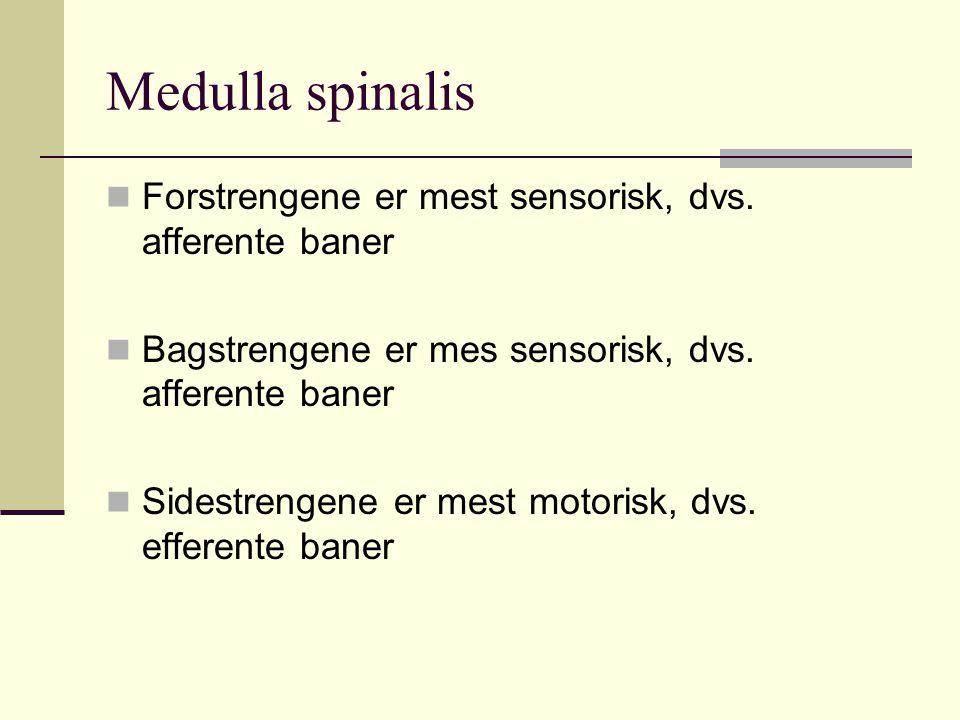 Medulla spinalis Forstrengene er mest sensorisk, dvs. afferente baner Bagstrengene er mes sensorisk, dvs. afferente baner Sidestrengene er mest motori