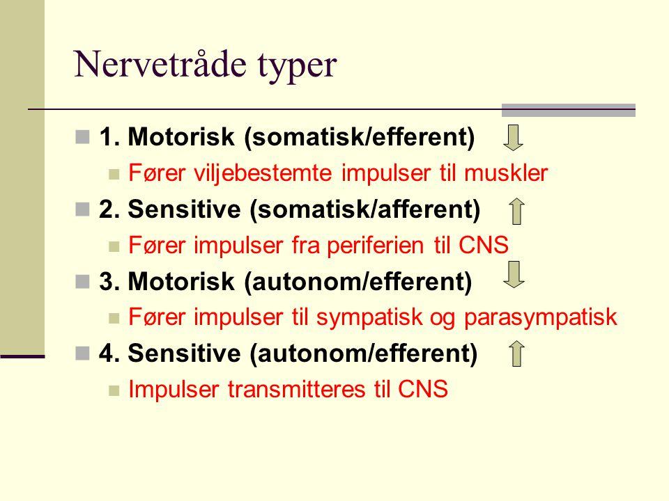 Nervetråde typer 1. Motorisk (somatisk/efferent) Fører viljebestemte impulser til muskler 2. Sensitive (somatisk/afferent) Fører impulser fra periferi