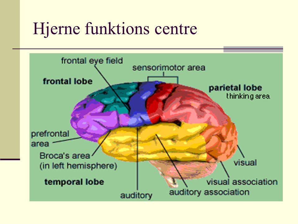 Hjerne funktions centre