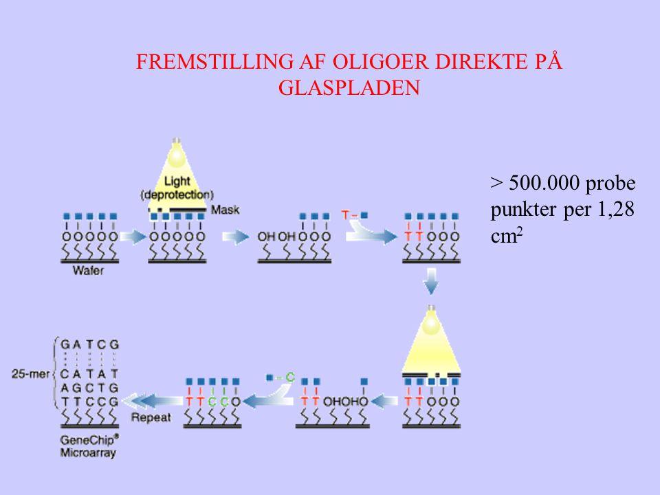 FREMSTILLING AF OLIGOER DIREKTE PÅ GLASPLADEN > 500.000 probe punkter per 1,28 cm 2