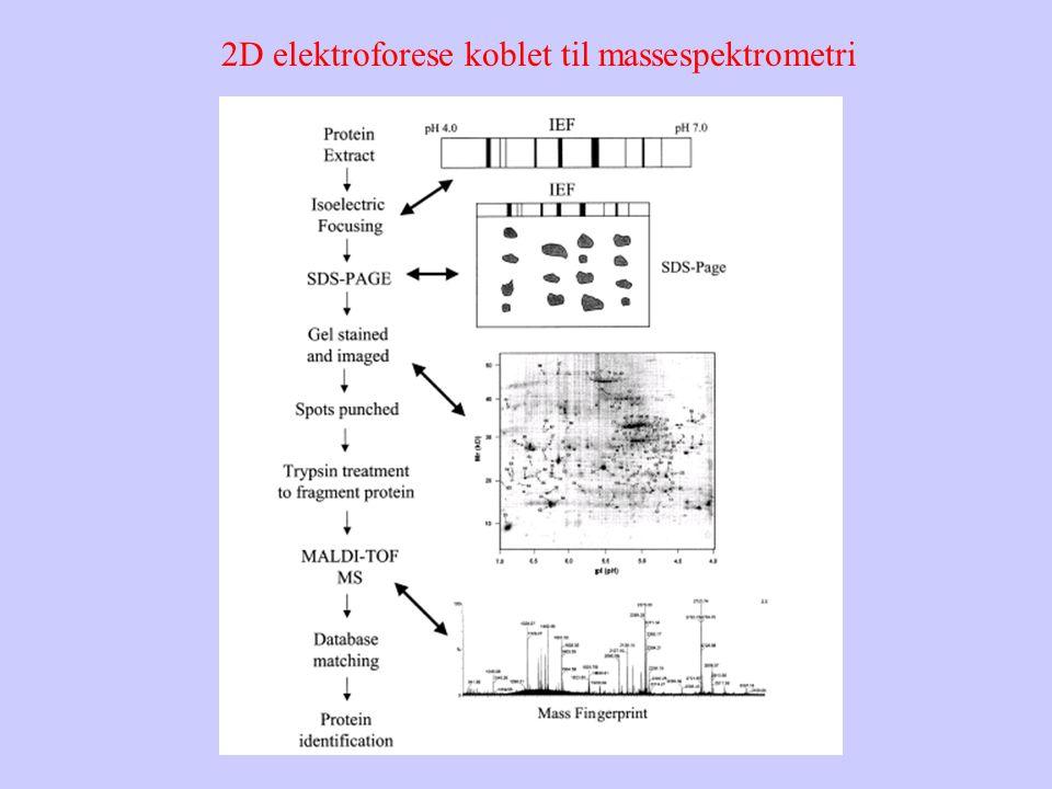 2D elektroforese koblet til massespektrometri