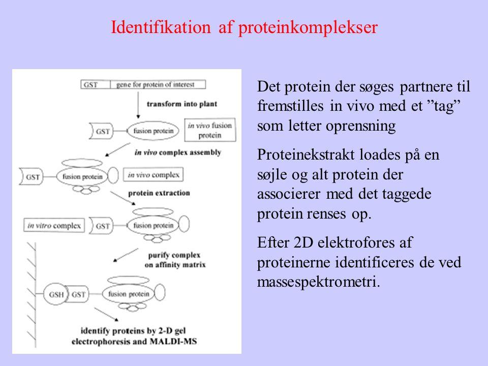 Identifikation af proteinkomplekser Det protein der søges partnere til fremstilles in vivo med et tag som letter oprensning Proteinekstrakt loades på en søjle og alt protein der associerer med det taggede protein renses op.