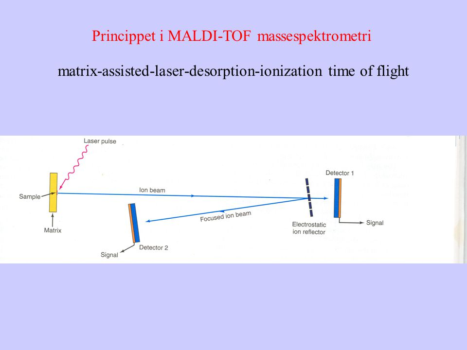 Princippet i MALDI-TOF massespektrometri matrix-assisted-laser-desorption-ionization time of flight
