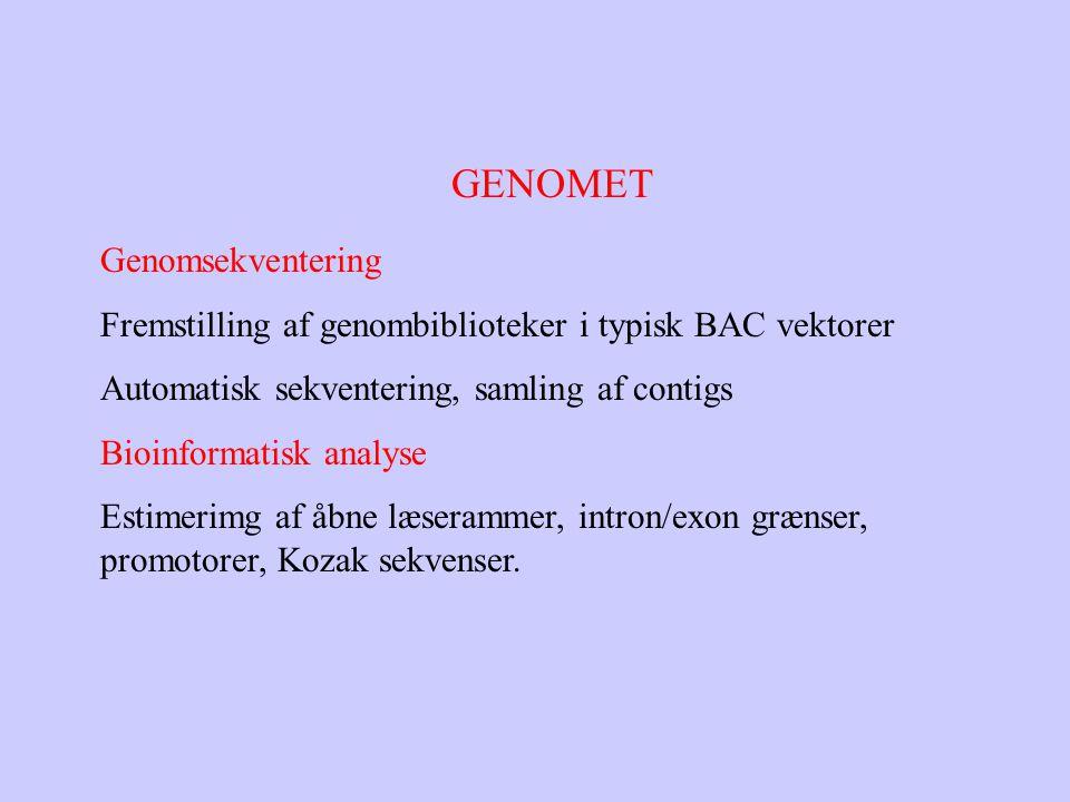 GENOMET Genomsekventering Fremstilling af genombiblioteker i typisk BAC vektorer Automatisk sekventering, samling af contigs Bioinformatisk analyse Estimerimg af åbne læserammer, intron/exon grænser, promotorer, Kozak sekvenser.