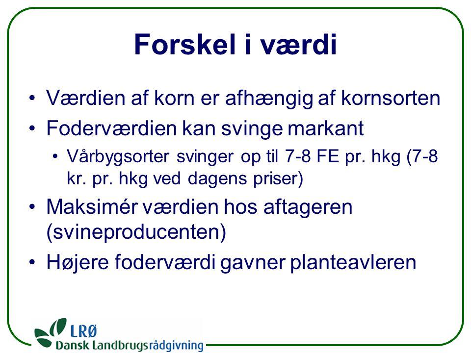 Forskel i værdi Værdien af korn er afhængig af kornsorten Foderværdien kan svinge markant Vårbygsorter svinger op til 7-8 FE pr.