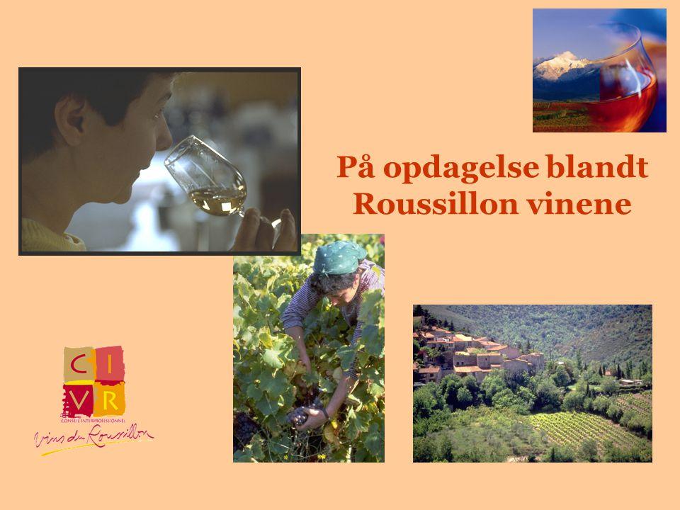 På opdagelse blandt Roussillon vinene