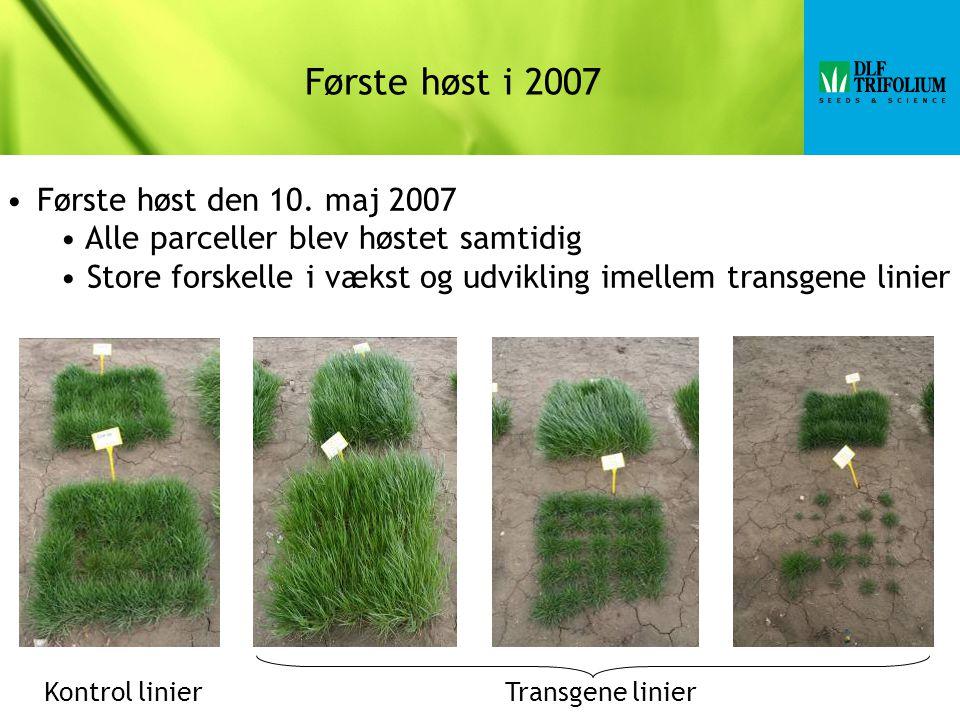 Første høst i 2007 Første høst den 10.