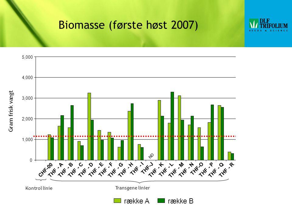 Biomasse (første høst 2007)