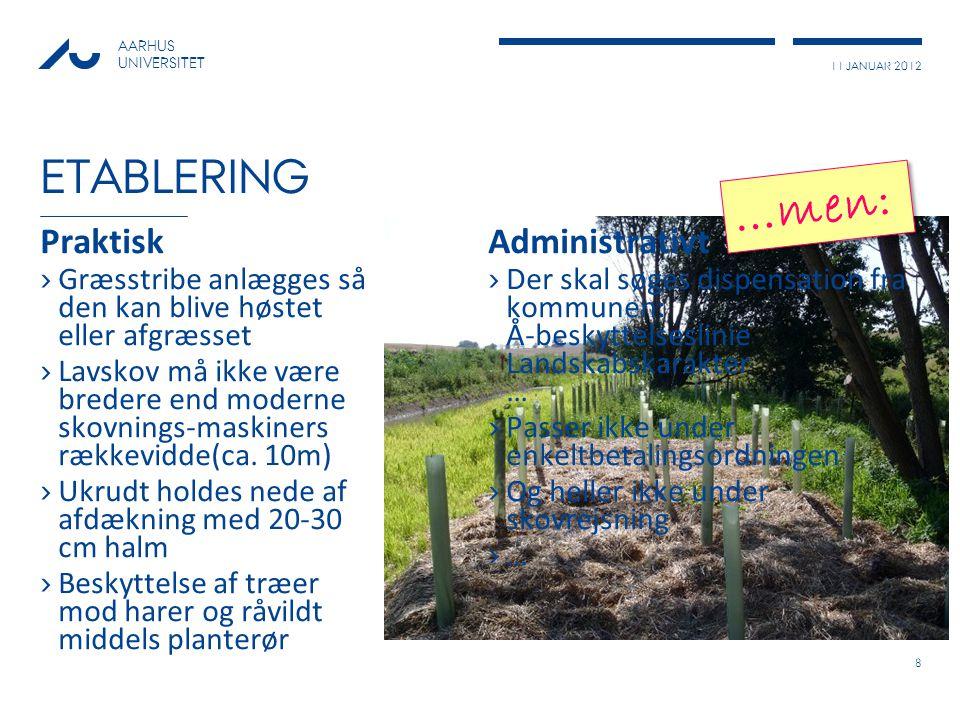 11 JANUAR 2012 AARHUS UNIVERSITET ETABLERING Praktisk ›Græsstribe anlægges så den kan blive høstet eller afgræsset ›Lavskov må ikke være bredere end moderne skovnings-maskiners rækkevidde(ca.