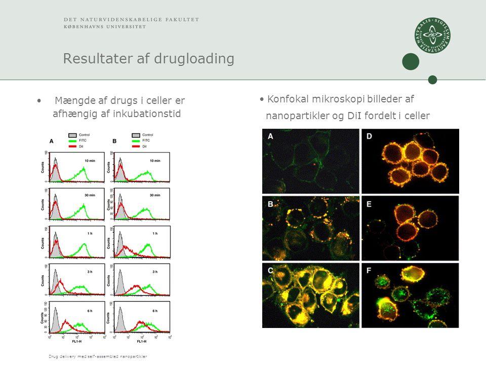 Drug delivery med self-assembled nanopartikler Resultater af drugloading Mængde af drugs i celler er afhængig af inkubationstid Konfokal mikroskopi billeder af nanopartikler og DiI fordelt i celler