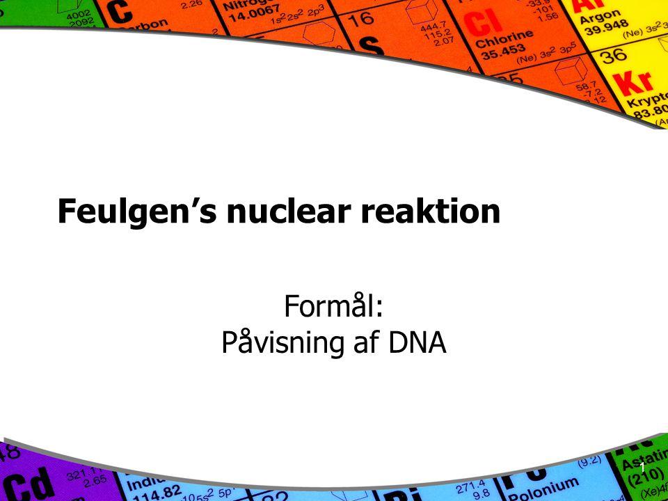 1 Feulgen's nuclear reaktion Formål: Påvisning af DNA