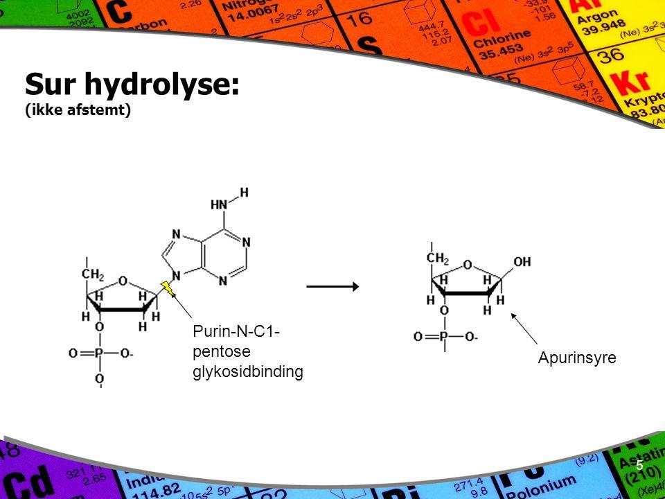 5 Sur hydrolyse: (ikke afstemt) Purin-N-C1- pentose glykosidbinding Apurinsyre