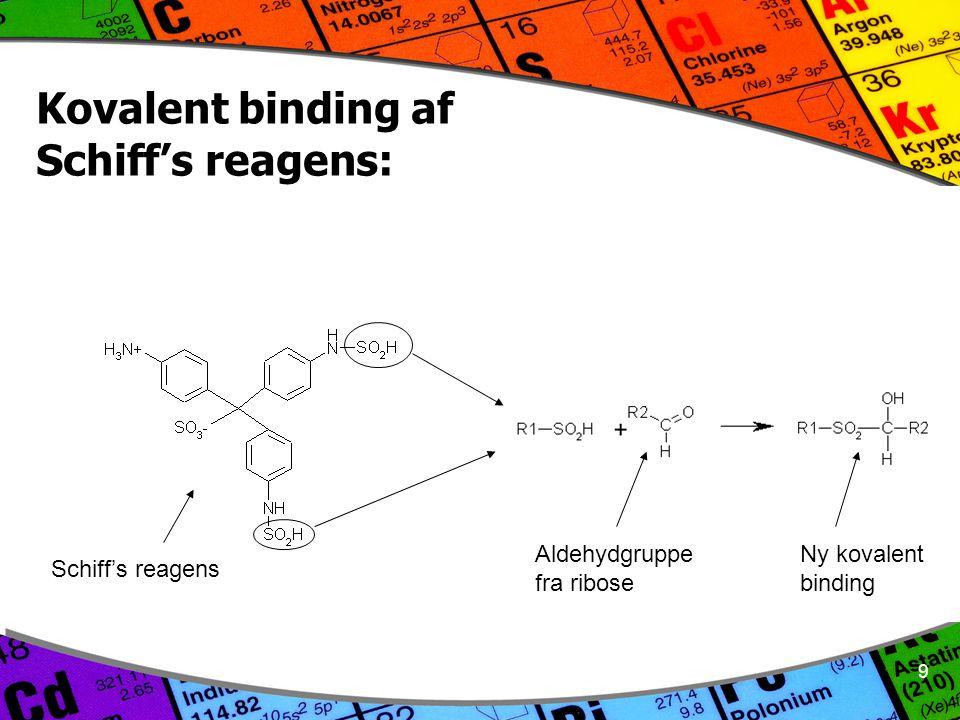 9 Kovalent binding af Schiff's reagens: Schiff's reagens Aldehydgruppe fra ribose Ny kovalent binding