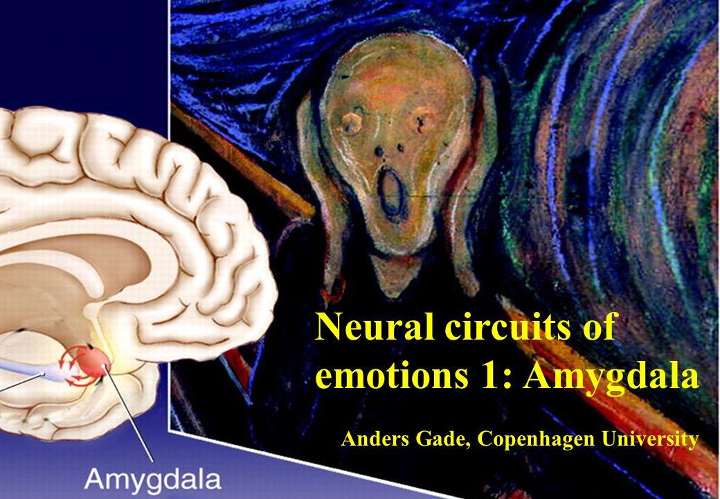 Gade Neural circuits of emotions 1: Amygdala Anders Gade, Copenhagen University