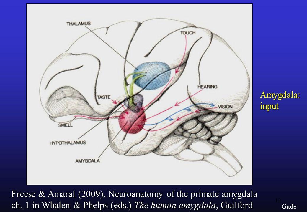 12 Gade Amygdala:input Freese & Amaral (2009). Neuroanatomy of the primate amygdala ch.