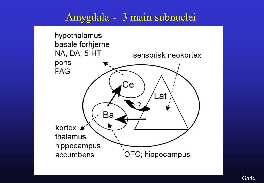 14 Gade Amygdala - 3 main subnuclei