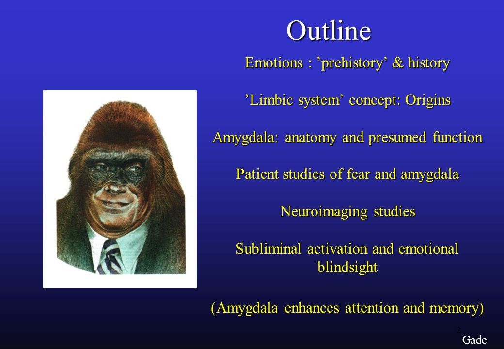 2 Gade Emotions : 'prehistory' & history 'Limbic system' concept: Origins Amygdala: anatomy and presumed function Patient studies of fear and amygdala Neuroimaging studies Subliminal activation and emotional blindsight (Amygdala enhances attention and memory) Outline