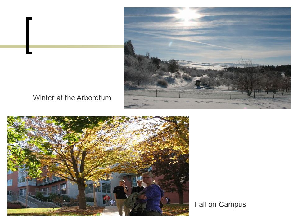 www.MScBA.frac.dk Fall on Campus Winter at the Arboretum