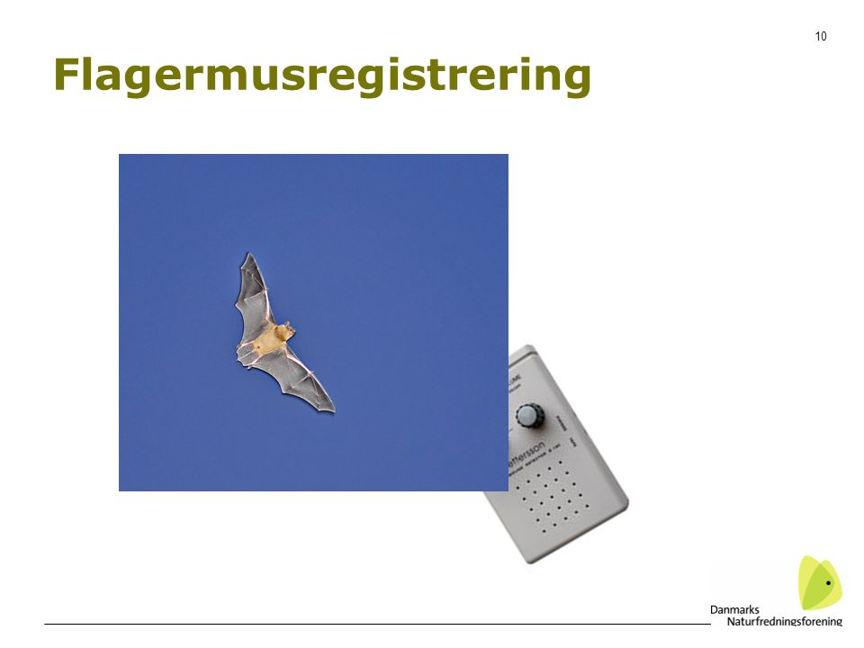 10 Flagermusregistrering