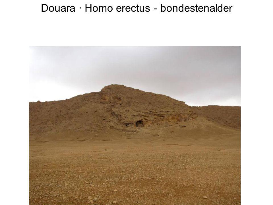 Douara · Homo erectus - bondestenalder