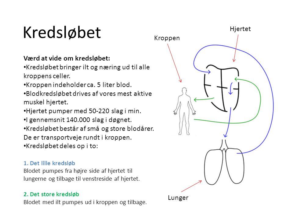 Værd at vide om kredsløbet: Kredsløbet bringer ilt og næring ud til alle kroppens celler. Kroppen indeholder ca. 5 liter blod. Blodkredsløbet drives a