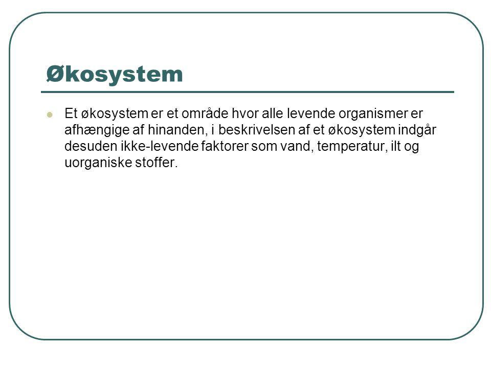 Økosystem Et økosystem er et område hvor alle levende organismer er afhængige af hinanden, i beskrivelsen af et økosystem indgår desuden ikke-levende faktorer som vand, temperatur, ilt og uorganiske stoffer.