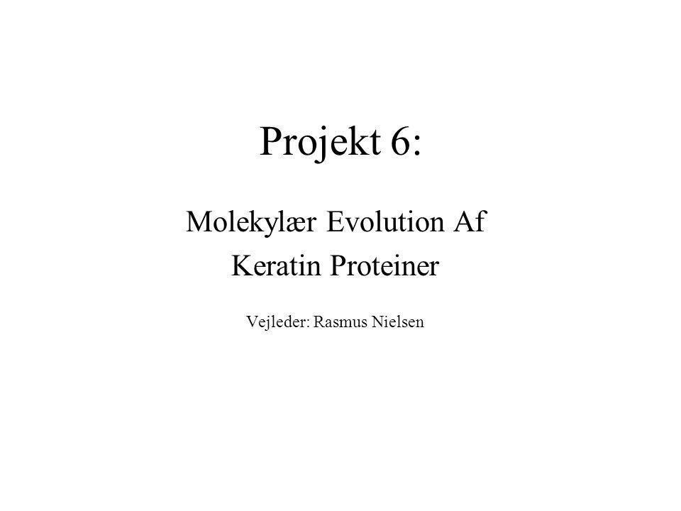 Projekt 6: Molekylær Evolution Af Keratin Proteiner Vejleder: Rasmus Nielsen