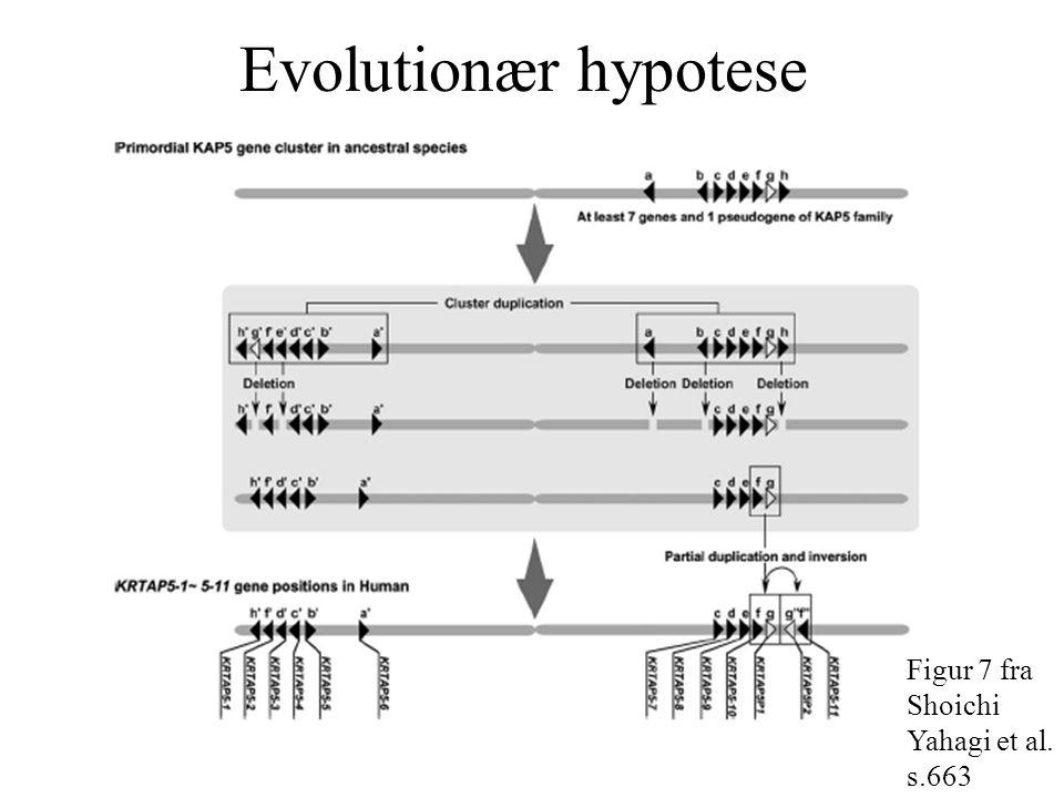 Evolutionær hypotese Figur 7 fra Shoichi Yahagi et al. s.663