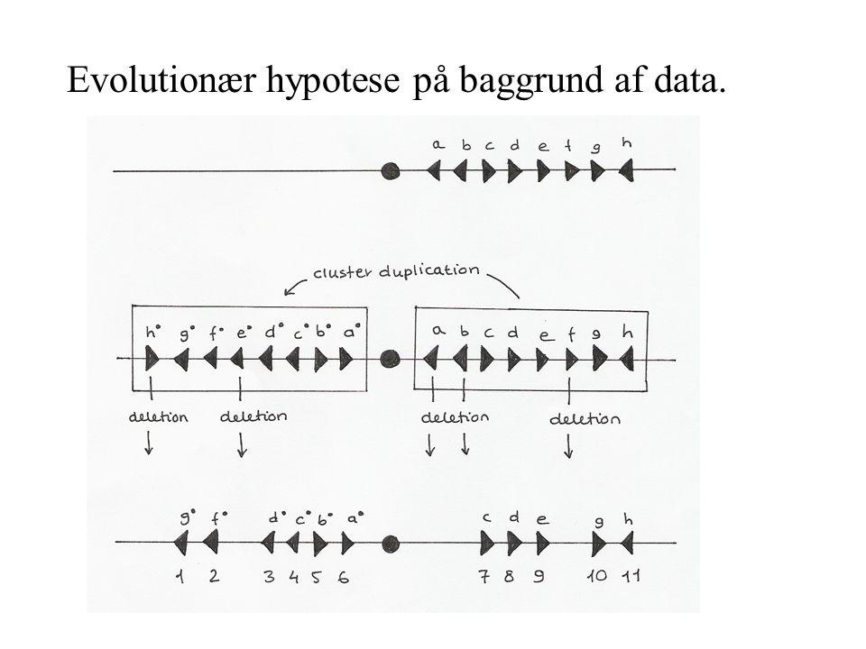 Evolutionær hypotese på baggrund af data.