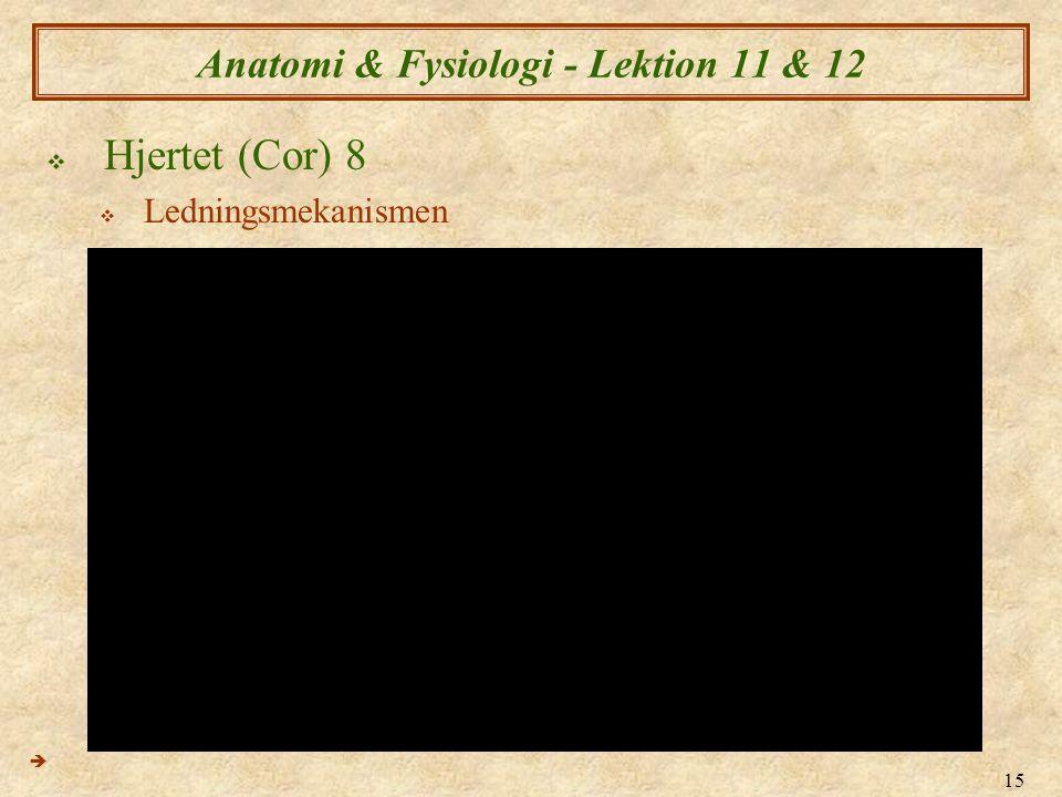 15 Anatomi & Fysiologi - Lektion 11 & 12  Hjertet (Cor) 8  Ledningsmekanismen 