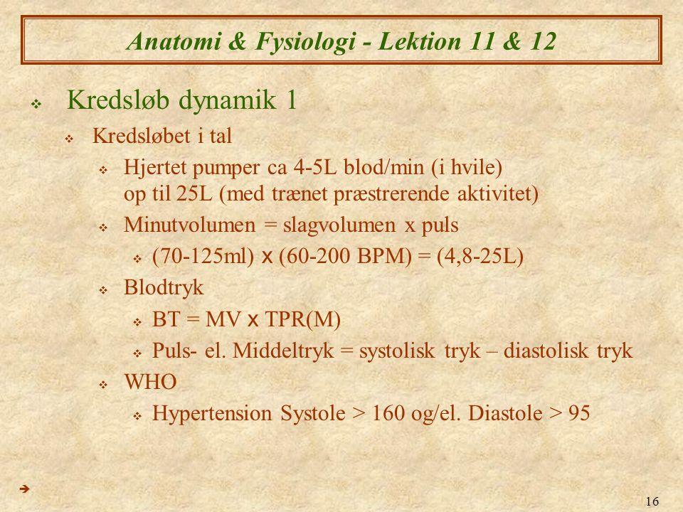 16 Anatomi & Fysiologi - Lektion 11 & 12  Kredsløb dynamik 1  Kredsløbet i tal  Hjertet pumper ca 4-5L blod/min (i hvile) op til 25L (med trænet pr