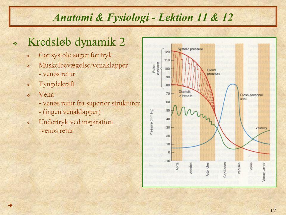 17 Anatomi & Fysiologi - Lektion 11 & 12  Kredsløb dynamik 2  Cor systole søger for tryk  Muskelbevægelse/venaklapper - venøs retur  Tyngdekraft 