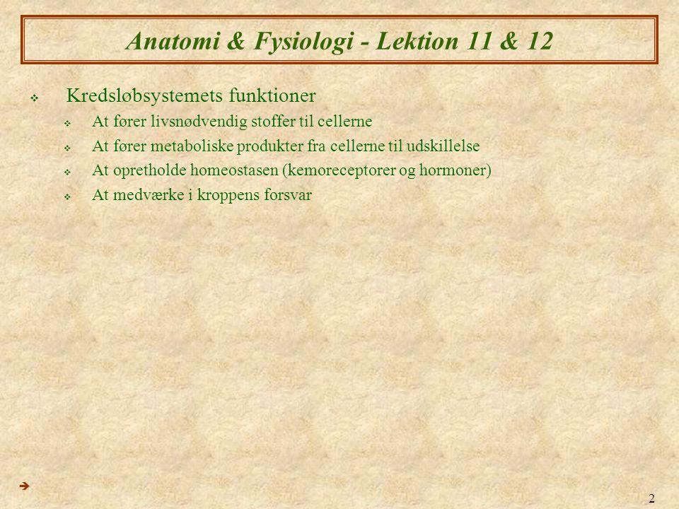 2 Anatomi & Fysiologi - Lektion 11 & 12  Kredsløbsystemets funktioner  At fører livsnødvendig stoffer til cellerne  At fører metaboliske produkter