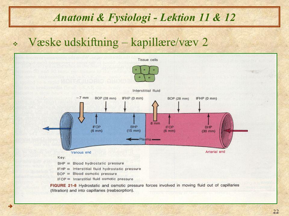 22 Anatomi & Fysiologi - Lektion 11 & 12  Væske udskiftning – kapillære/væv 2 