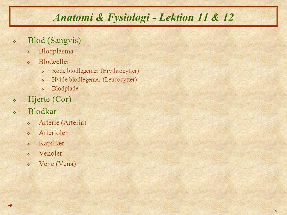 3 Anatomi & Fysiologi - Lektion 11 & 12  Blod (Sangvis)  Blodplasma  Blodceller  Røde blodlegemer (Erythrocytter)  Hvide blodlegemer (Leucocytter