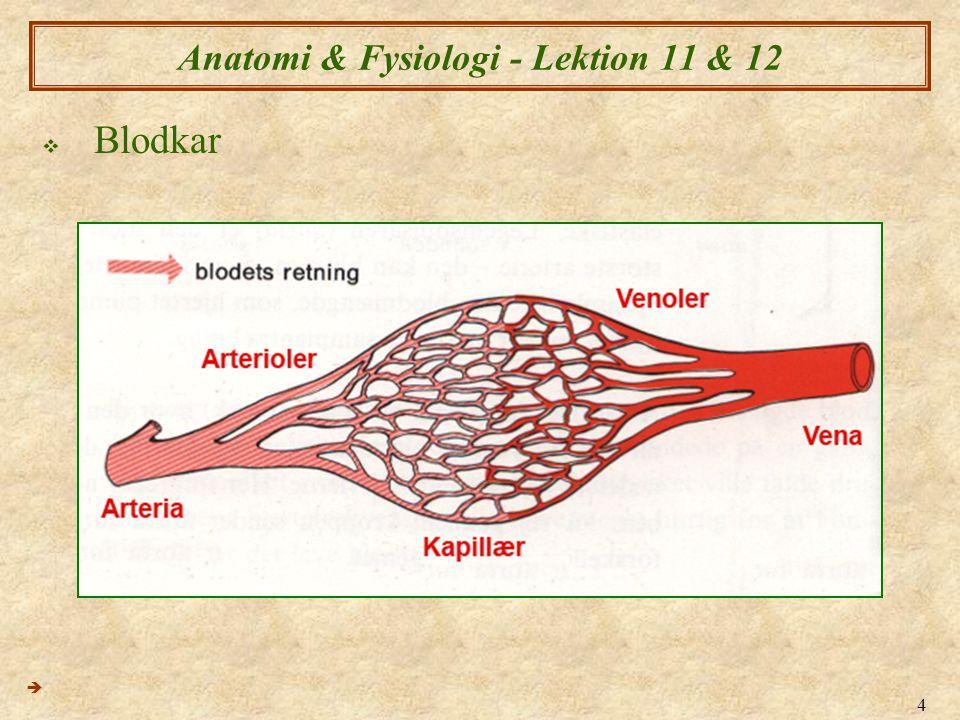 4 Anatomi & Fysiologi - Lektion 11 & 12  Blodkar 