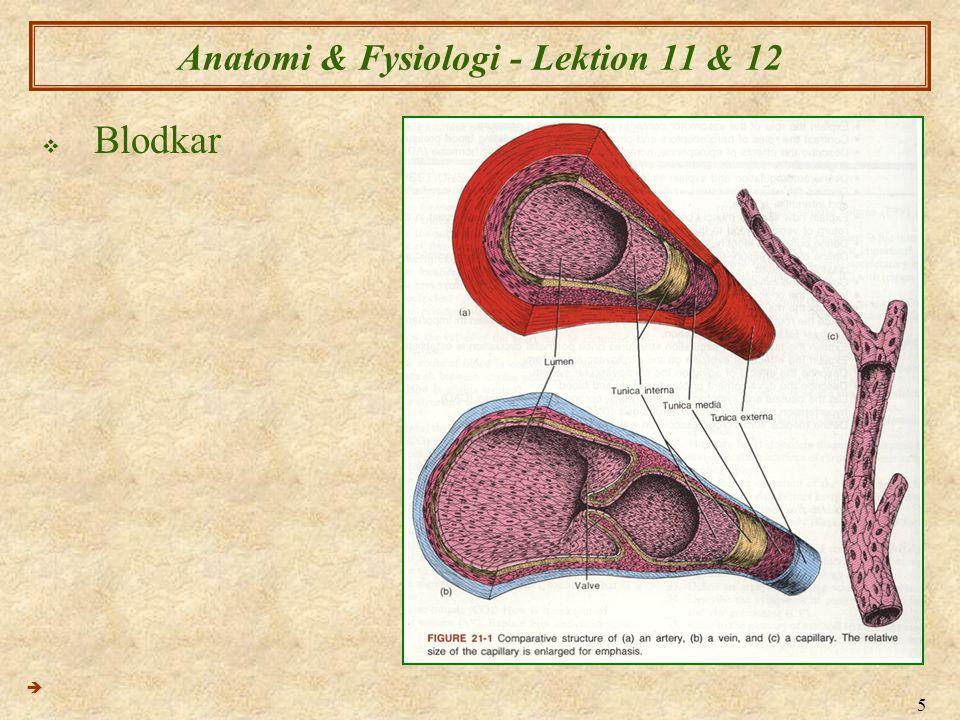 5 Anatomi & Fysiologi - Lektion 11 & 12  Blodkar 