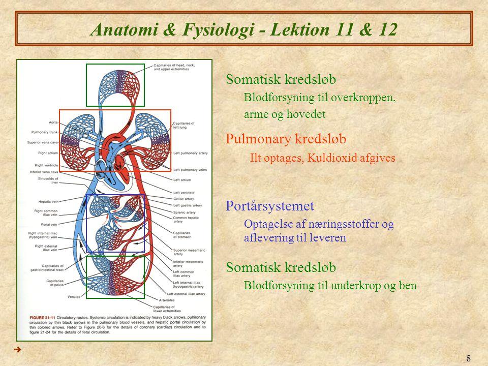 8 Anatomi & Fysiologi - Lektion 11 & 12  Pulmonary kredsløb Ilt optages, Kuldioxid afgives Portårsystemet Optagelse af næringsstoffer og aflevering t