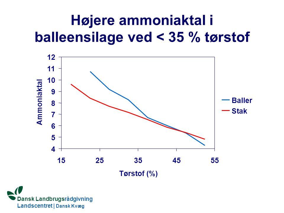 Dansk Landbrugsrådgivning Landscentret   Dansk Kvæg S:\SUNDFODE\HBB\PowerPoint\Grovfoderseminar 2005.ppt Højere ammoniaktal i balleensilage ved < 35 % tørstof 4 5 6 7 8 9 10 11 12 1525354555 Tørstof(%) Ammoniaktal Baller Stak
