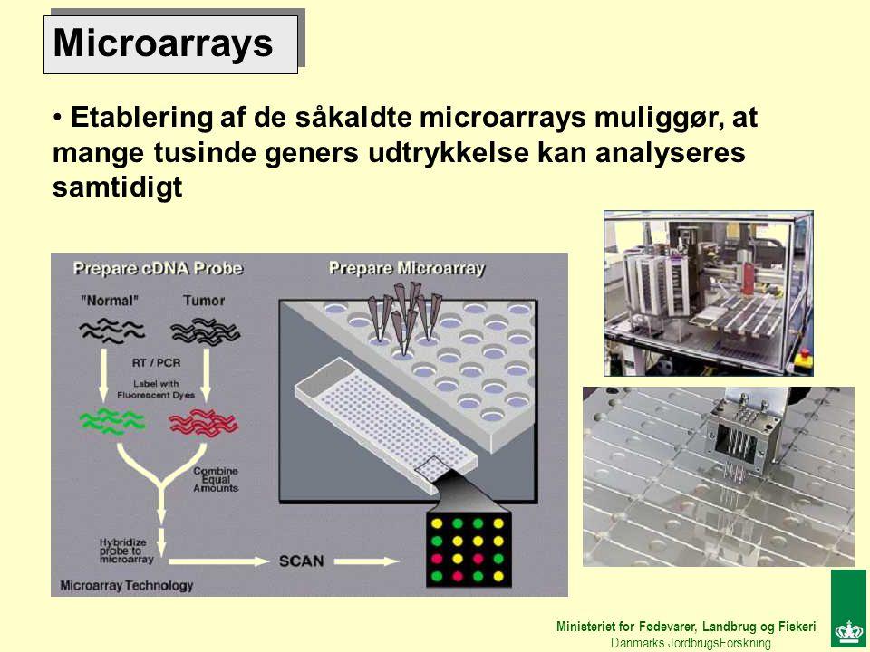 Microarrays Etablering af de såkaldte microarrays muliggør, at mange tusinde geners udtrykkelse kan analyseres samtidigt Ministeriet for Fødevarer, Landbrug og Fiskeri Danmarks JordbrugsForskning