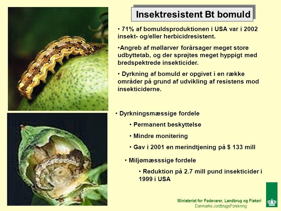 Insektresistent Bt bomuld 71% af bomuldsproduktionen i USA var i 2002 insekt- og/eller herbicidresistent.