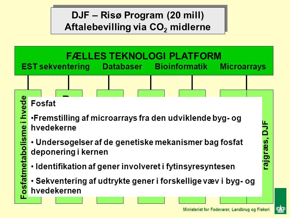 DJF – Risø Program (20 mill) Aftalebevilling via CO 2 midlerne DJF – Risø Program (20 mill) Aftalebevilling via CO 2 midlerne FÆLLES TEKNOLOGI PLATFORM EST sekventering Databaser Bioinformatik Microarrays Fosfatmetabolisme i hvede DJF Aminosyremetabolisme i byg, DJF Fytinsyre biosyntese i byg Risø Meldugresistens i byg Risø Blomstring i rajgræs Risø Fruktanmetabolisme i rajgræs, Risø, Fruktanmetabolisme i rajgræs, DJF Ministeriet for Fødevarer, Landbrug og Fiskeri Fosfat Fremstilling af microarrays fra den udviklende byg- og hvedekerne Undersøgelser af de genetiske mekanismer bag fosfat deponering i kernen Identifikation af gener involveret i fytinsyresyntesen Sekventering af udtrykte gener i forskellige væv i byg- og hvedekernen