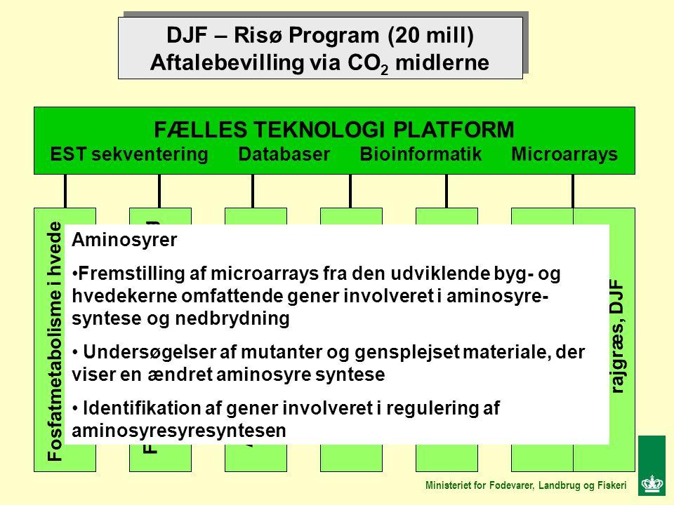 DJF – Risø Program (20 mill) Aftalebevilling via CO 2 midlerne DJF – Risø Program (20 mill) Aftalebevilling via CO 2 midlerne FÆLLES TEKNOLOGI PLATFORM EST sekventering Databaser Bioinformatik Microarrays Fosfatmetabolisme i hvede DJF Aminosyremetabolisme i byg, DJF Fytinsyre biosyntese i byg Risø Meldugresistens i byg Risø Blomstring i rajgræs Risø Fruktanmetabolisme i rajgræs, Risø, Fruktanmetabolisme i rajgræs, DJF Ministeriet for Fødevarer, Landbrug og Fiskeri Aminosyrer Fremstilling af microarrays fra den udviklende byg- og hvedekerne omfattende gener involveret i aminosyre- syntese og nedbrydning Undersøgelser af mutanter og gensplejset materiale, der viser en ændret aminosyre syntese Identifikation af gener involveret i regulering af aminosyresyresyntesen