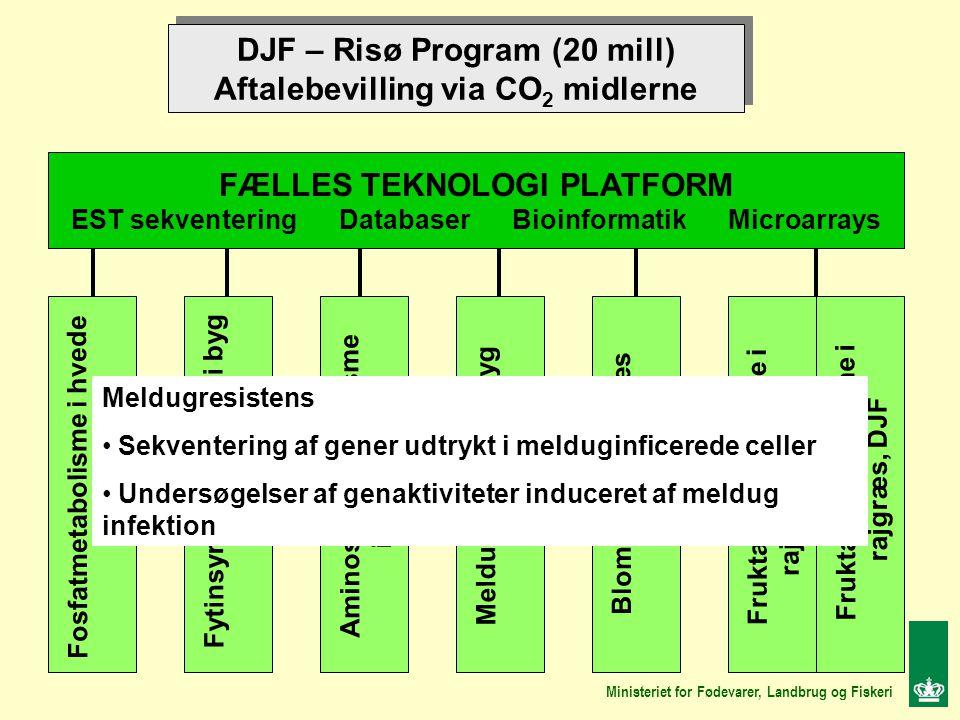 DJF – Risø Program (20 mill) Aftalebevilling via CO 2 midlerne DJF – Risø Program (20 mill) Aftalebevilling via CO 2 midlerne FÆLLES TEKNOLOGI PLATFORM EST sekventering Databaser Bioinformatik Microarrays Fosfatmetabolisme i hvede DJF Aminosyremetabolisme i byg, DJF Fytinsyre biosyntese i byg Risø Meldugresistens i byg Risø Blomstring i rajgræs Risø Fruktanmetabolisme i rajgræs, Risø, Fruktanmetabolisme i rajgræs, DJF Ministeriet for Fødevarer, Landbrug og Fiskeri Meldugresistens Sekventering af gener udtrykt i melduginficerede celler Undersøgelser af genaktiviteter induceret af meldug infektion